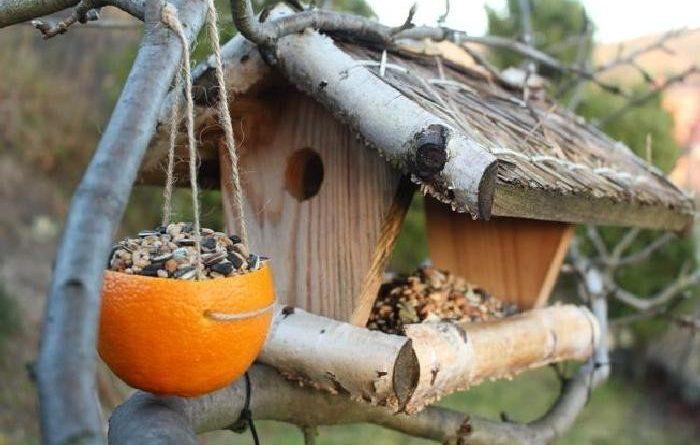 Астраханцев просят помочь птицам