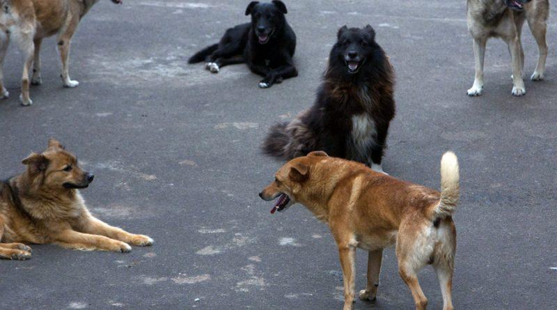 В Астрахани произошло еще одно нападение бродячих собак