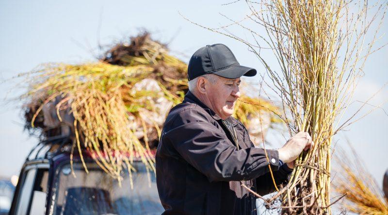 Астраханские экологи высадили 4 тысячи саженцев ивы и ясеня