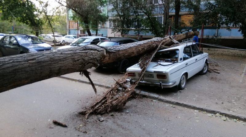 Упавшее дерево раздавило автомобиль в Астрахани