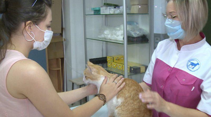 В Астраханском госуниверситете открыли ветеринарную клинику