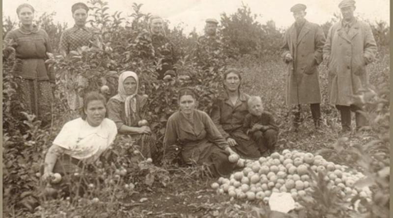 140 лет назад начало развиваться садоводство в Харабалях