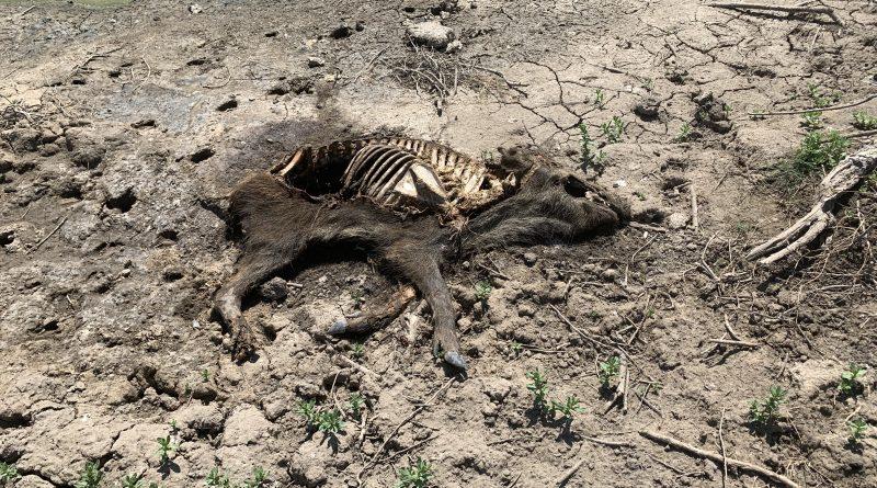 На базе отдыха под Астраханью складировали останки скота