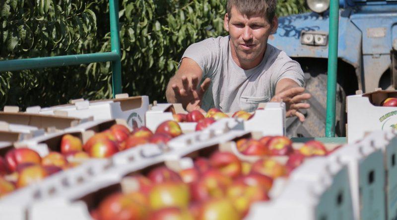 Связи садоводов Греции с астраханцами не прекратились и в пандемию