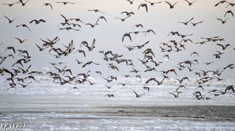 Астраханский заповедник рассказал о зимовавших в дельте птицах
