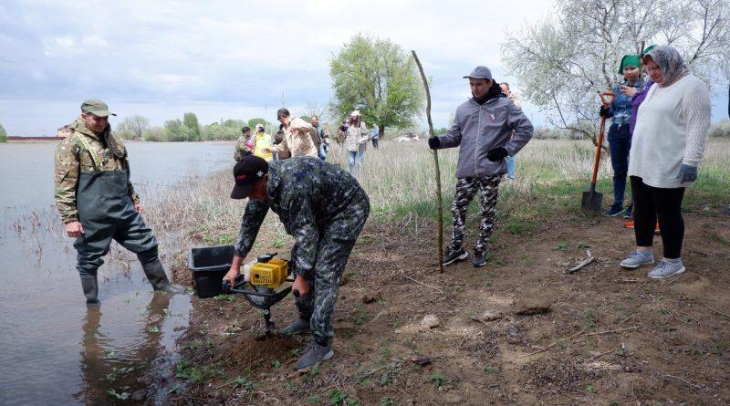 Астраханские общественники решили практиковать коловую посадку ивы